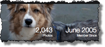 Flickr Count